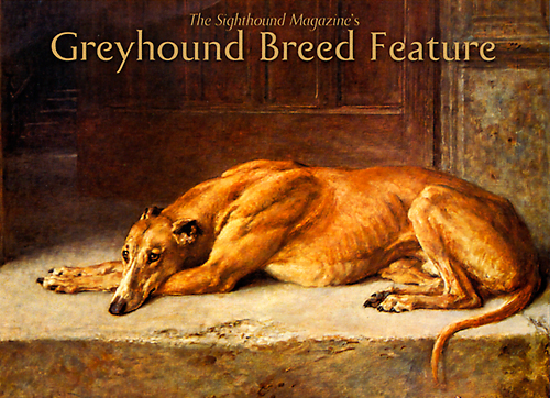 greyhound-breed-feature.jpg