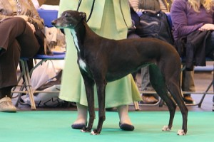 Crufts13_12_Luv_Lex_Lak_Louise