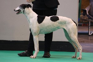 Crufts13_12_Motion_Picture