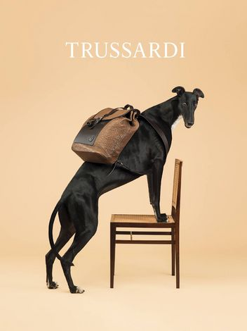 trussardi-dog-1-w352