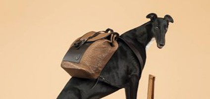 trussardi-dog-1-w352hero