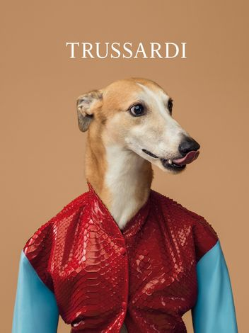 trussardi-dog-2-w352