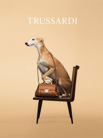 trussardi-dog-5-w352