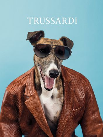 trussardi-dog-6-w352