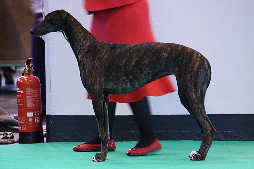 Crufts14_12_FCIsolde