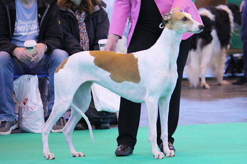 Crufts14_16_RanslSimplBewitched2