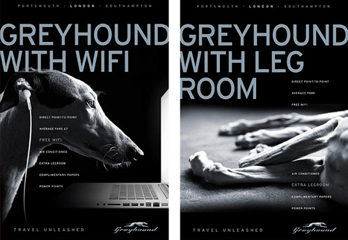 Greyhound-with-WiFi