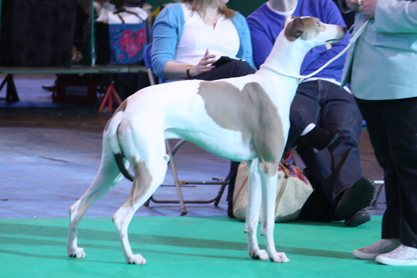 Crufts15_04_MMrDaydreamer3