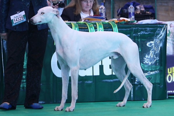 Crufts15_06_MPersnikerty1